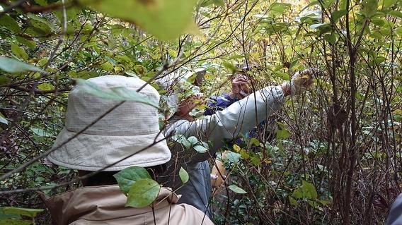 ツツジの種取をしました: まちづくりびと@倉敷