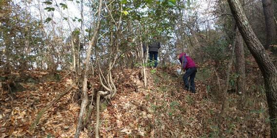 帯江銅山跡にツツジの種取りに行きました: まちづくりびと@倉敷